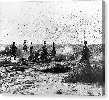 Morocco: Locusts, 1954 Canvas Print
