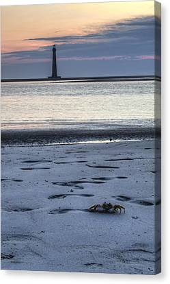 Morris Island Lighthouse And Crab Canvas Print by Dustin K Ryan