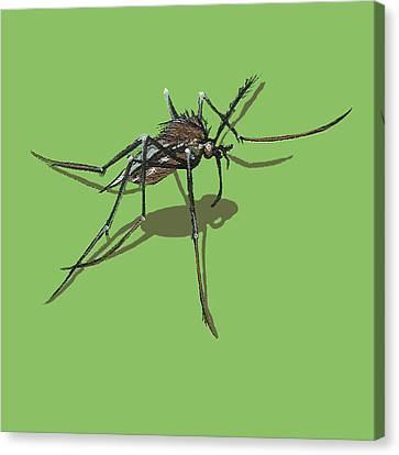 Mosquito Canvas Print by Jude Labuszewski
