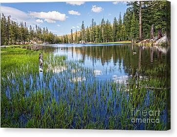 Mosquito Lake Reflections 2 Canvas Print