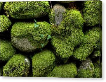 Canvas Print featuring the photograph Moss And Ivy by Mike Eingle