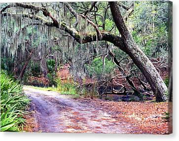 Moss Covered Live Oak Canvas Print