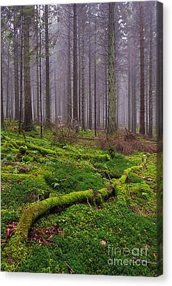 Moss Covered Log In Misty Forest Canvas Print