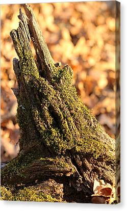 Canvas Print featuring the photograph Moss Covered Tree Stump  by Sheila Brown