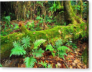 Moss On Fallen Tree And Ferns Canvas Print by Thomas R Fletcher