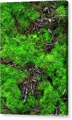 Canvas Print featuring the photograph Moss On The Hillside by Mike Eingle