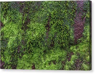 Moss Rock Canvas Print by Randy Walton