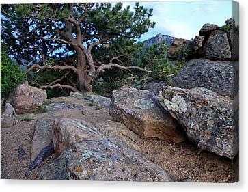 Moss Rocks And A Tree Canvas Print by James Steele