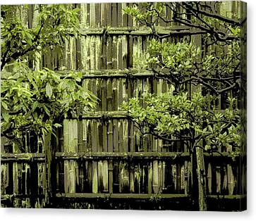Mossy Bamboo Fence - Digital Art Canvas Print by Carol Groenen