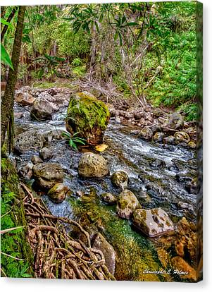 Canvas Print - Mossy Boulder by Christopher Holmes