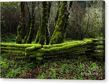 Mossy Fence 3 Canvas Print by Bob Christopher
