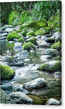 Mossy Forest Stream Canvas Print by Az Jackson