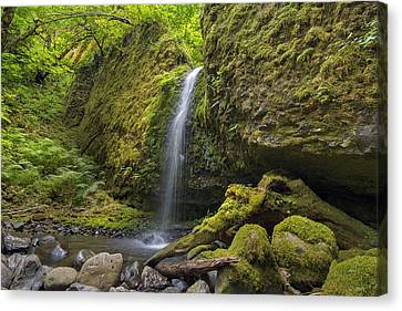 Mossy Grotto Falls In Summer Canvas Print by David Gn