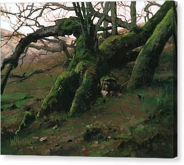 Mossy Oak Canvas Print by Bill Mather