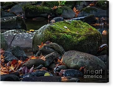 Mossy Rocks Canvas Print by Doug Sturgess