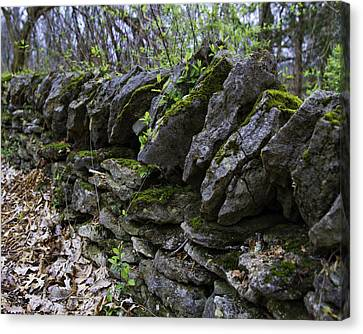 Mossy Stone Fence, Frankfort, Ky Canvas Print by Rebecca Snyder