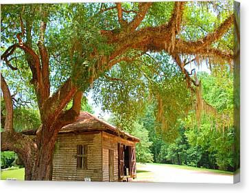 Mossy Tree In Natchez Canvas Print