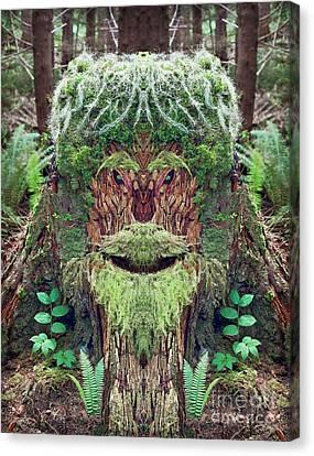 Mossman Tree Stump Canvas Print by Martin Konopacki