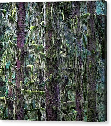 Mossy Trees Canvas Print by Stephen Stookey