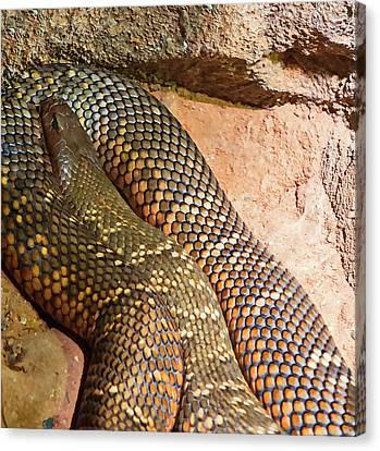 Canvas Print featuring the photograph Most Venomous Snake  by Miroslava Jurcik