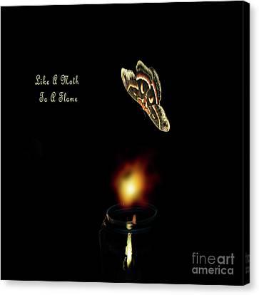 Shakespear Canvas Print - Moth Drawn To A Flame by Linda Troski