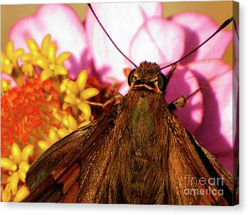 Moth On Pink And Yellow Flowers Canvas Print
