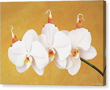 Orchids Canvas Print - Moth Orchid by Anne Geddes