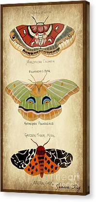 Moth Study Canvas Print