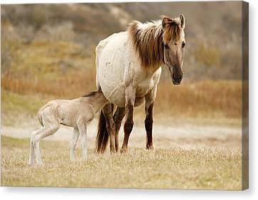 Mother And Baby Horse Canvas Print by Roeselien Raimond
