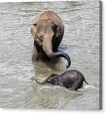 Mother And Baby Canvas Print by Jane Rix