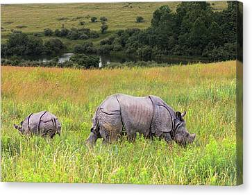 Mother And Baby Rhinos Canvas Print