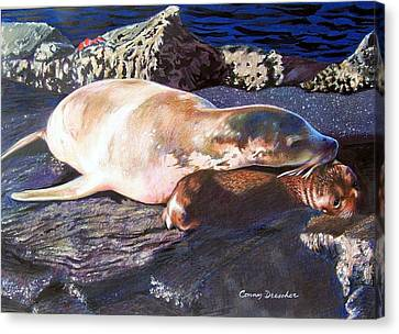 Mother And Child Sea Lion Canvas Print by Constance Drescher
