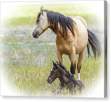 Mare And Foal Canvas Print by Joe Hudspeth