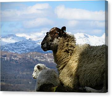 Canvas Print featuring the photograph Mother And Lamb by RKAB Works