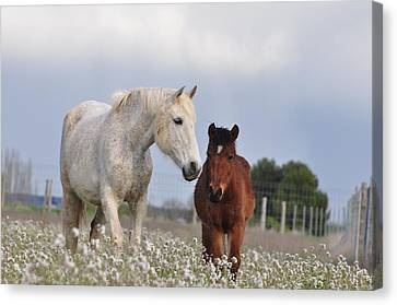 Mother And Son Canvas Print by By Ana_gr