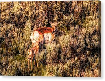 Pronghorn Antelope Canvas Print - Mother Antelope In Sagebrush by Dan Sproul