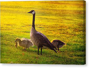 Mother Goose Canvas Print - Mother Goose Color by Camille Lopez