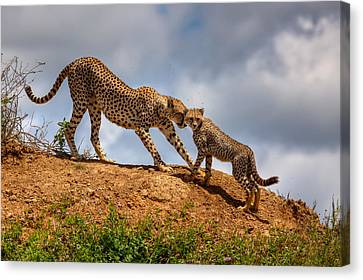Mother Love Canvas Print by Amnon Eichelberg