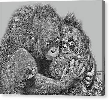 Mother Love Canvas Print by Larry Linton