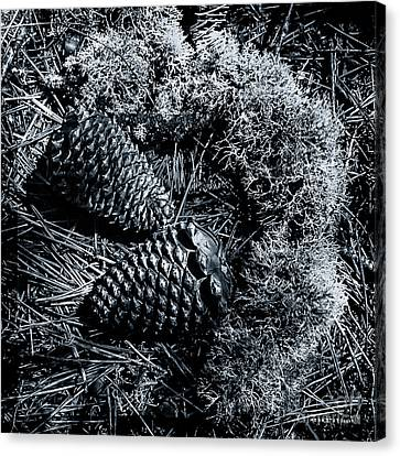 Mother Nature Treasures Black White Canvas Print