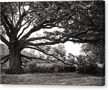 Mother Nature Canvas Print by Edward Myers