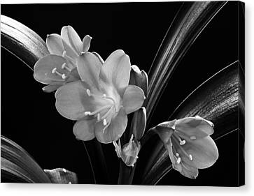 Country Magazine Decor Canvas Print - Mother's Clivia Lily by Sandra Foster