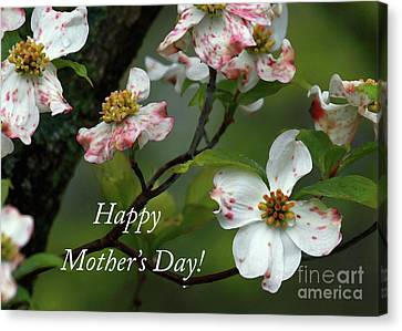 Canvas Print featuring the photograph Mother's Day Dogwood by Douglas Stucky
