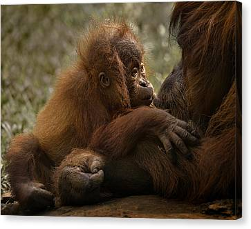 Mother's Love Canvas Print by C.s.tjandra