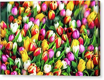 Motley Bunch Of Dutch Tulips Canvas Print