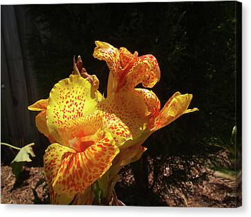 Mottled Canna Lilly Canvas Print by Wayne Skeen