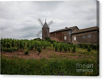 Beaujolais Canvas Print - Moulin-a-vent by Timothy Johnson