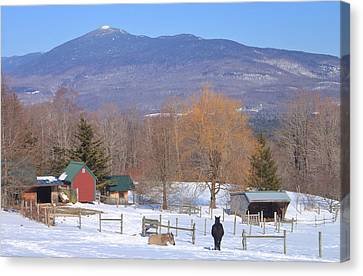 Mount Abraham And Winter Farm Green Mountains Canvas Print by John Burk