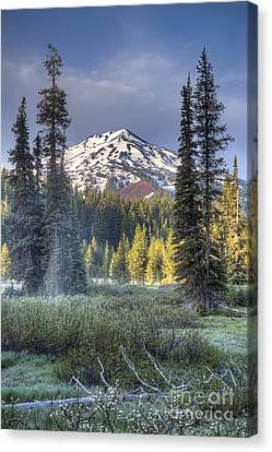 Mount Bachelor Over Meadow Canvas Print by Twenty Two North Photography