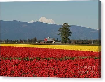 Mount Baker Skagit Valley Tulip Festival Barn Canvas Print